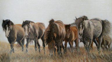 ART by Nedzad_livanjski konji